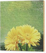 Two Yellow Gerber Daisies Wood Print