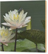 Two Yellow Water Lilies Wood Print