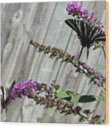 Two Zebra Swallowtail Butterflies Wood Print