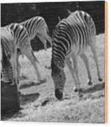 Two Zebras Wood Print