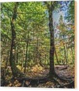 U Shaped Trees Cascade Mountain Ny New York Wood Print