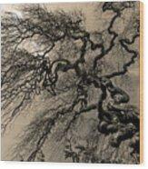 Udine Castle Wood Print