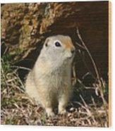 Uinta Ground Squirrel Wood Print