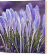 Ultra Violet Sound Wood Print