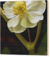 Umbrella Blossom Wood Print