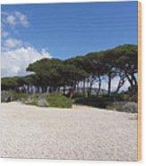 Umbrella Pine, Lerins Island Wood Print