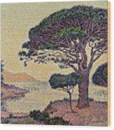 Umbrella Pines At Caroubiers Wood Print by Paul Signac