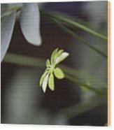 Umbrella Plant Wood Print