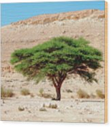 Umbrella Thorn Acacia, Negev Israel Wood Print