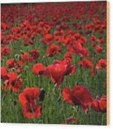 Umbria  Poppies 3 Wood Print