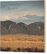 Under  Big Skies Of Montana Wood Print by Doug van Kampen, van Kampen Photography