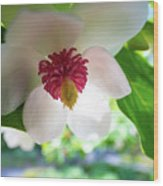 Under Flower Wood Print