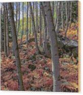 Under The Aspens Wood Print