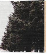 Under The Blue Spruce Wood Print
