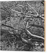 Under The Charred Laurel Sumac Wood Print