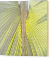 Under The Palm I Gp Wood Print