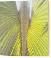 Under The Palm II Gp Wood Print