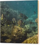 Under The Sea Scape Wood Print