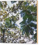 Under The Trees 2 Wood Print