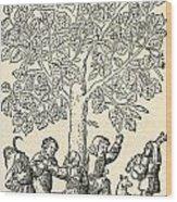 Under The Village Linden Tree Wood Print