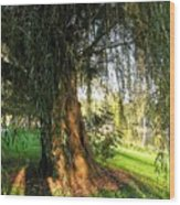 Under The Weeping Willow Wood Print