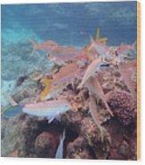 Under Water Fiji Wood Print