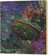 Undersea Clam Wood Print
