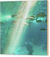 Underwater Background With Sunbeams Wood Print