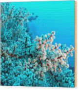 Underwater Cherry Blossom Wood Print