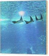 Underwater Manta Background Wood Print