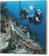 Underwater Photography Wood Print by Dave Fleetham - Printscapes