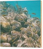 Underwater Photography Wood Print