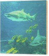 Underwater Shark Background Wood Print