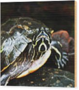 Underwater Turtle Wood Print