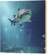 Underwater View Of Shark And Tropical Fish Wood Print by Rich Lewis