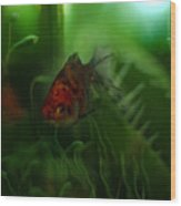 Underwater World Wood Print