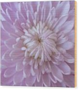 Unfolding Beauty Wood Print