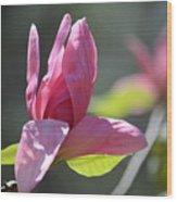 Unfolding - Star Magnolia Wood Print