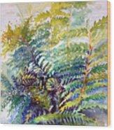 Unfurling Ferns Wood Print