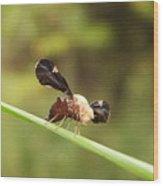 Unidenti Fly Wood Print