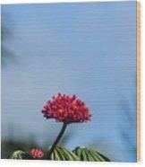 Unique Flower Wood Print