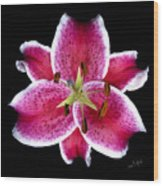 Unique Lily In Fushia Wood Print
