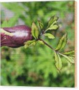 Unique Sprout Wood Print