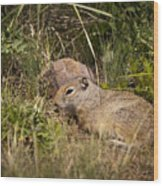 Unita Ground Squirrel Wood Print