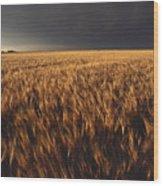 United States, Kansas, Summer Thunder Wood Print