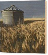 United States, Kansas Wheat Field Wood Print