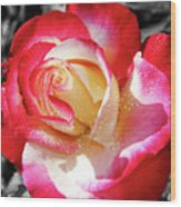 Unity Rose Wood Print