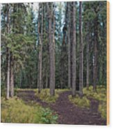 University Of Alaska Fairbanks Trail System Wood Print