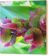 Unknown Flower Seeds Wood Print