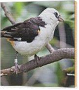 Unknown White Bird On Tree Branch Wood Print